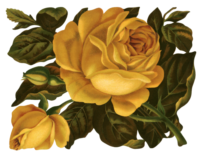 Valley_of_Roses_emb_015 (700x538, 541Kb)