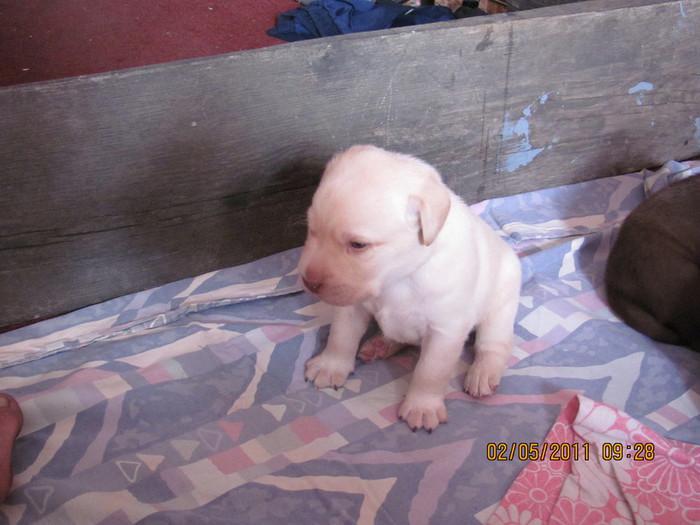 Очередной отчет о Санте и ее щенках IMG_0329 (700x525, 89Kb)