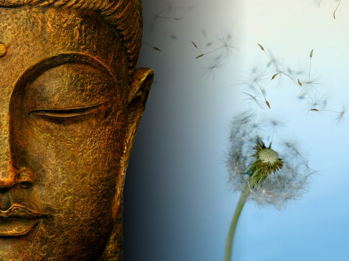 buddha-wallpapers-photos-pictures-dandelion (700x523, 130Kb)