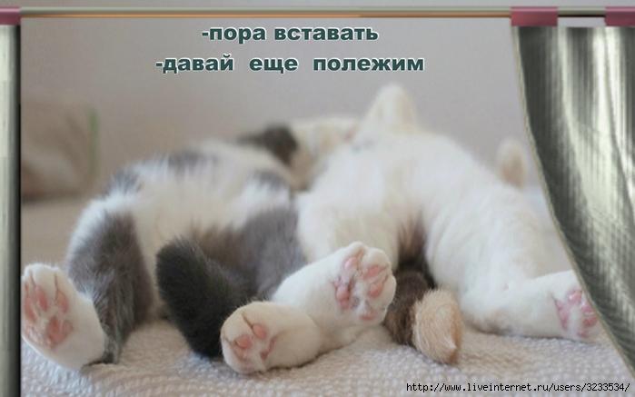 Поздравления, соня засоня вставай картинки