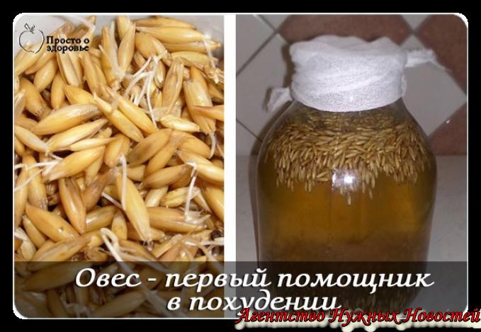 Овес Лечение От Похудения. Настой овса для снижения веса и очищения организма
