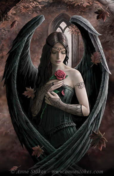 Angel_Rose_by Anne Stokes (383x591, 63Kb)