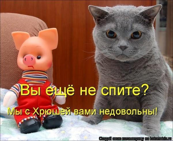 Фото мышек смешные данного