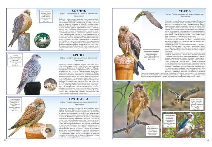 древнерусскую кречет птица фото и описание шоу приняли