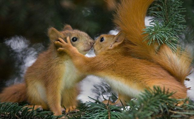 these_funny_animals_507_640_01 (640x395, 46Kb)