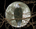 Превью Dimensions13688 Eagle in Moonlight (594x468, 255Kb)