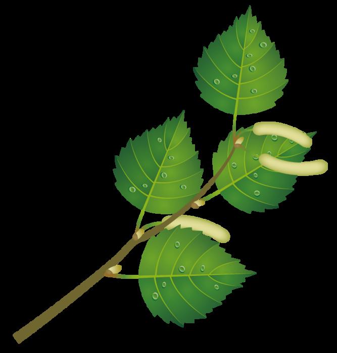 Картинки веточка с листьями для детей