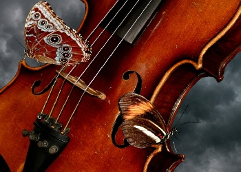 butterflys_and_violin_Wallpaper_jl2ae (350x250, 49Kb)