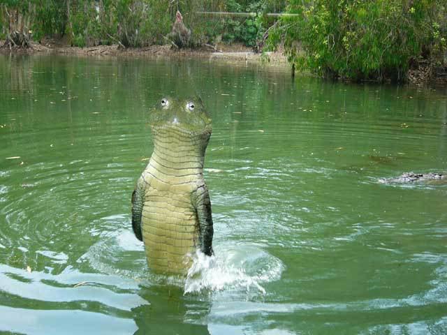 Рептилии, кожа которых покрыта чешуйками, отличаются от млекопитающих...