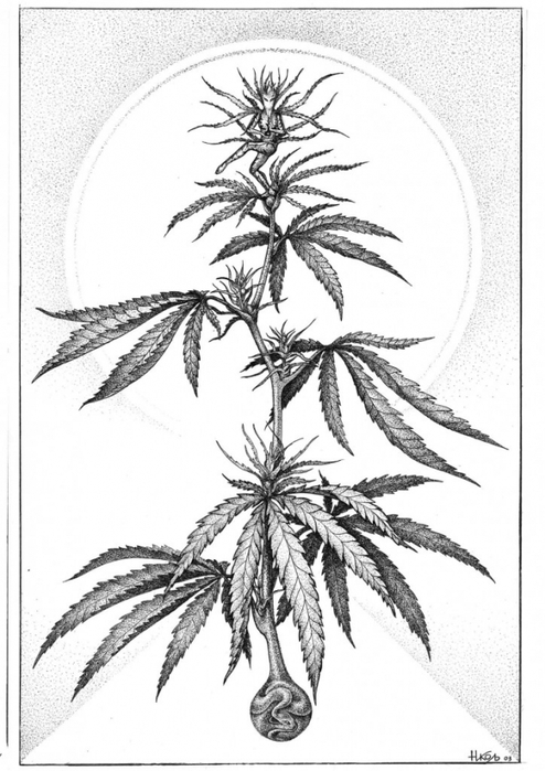 Куст конопли нарисовать марихуана или водка что хуже