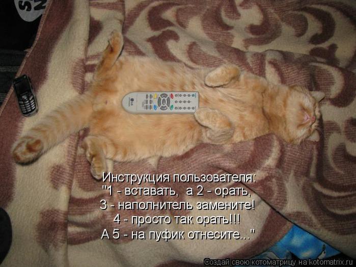 Картинки с надписями прикольные рыжие коты