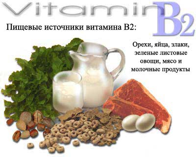 vitamin-b2-source (400x320, 19Kb)
