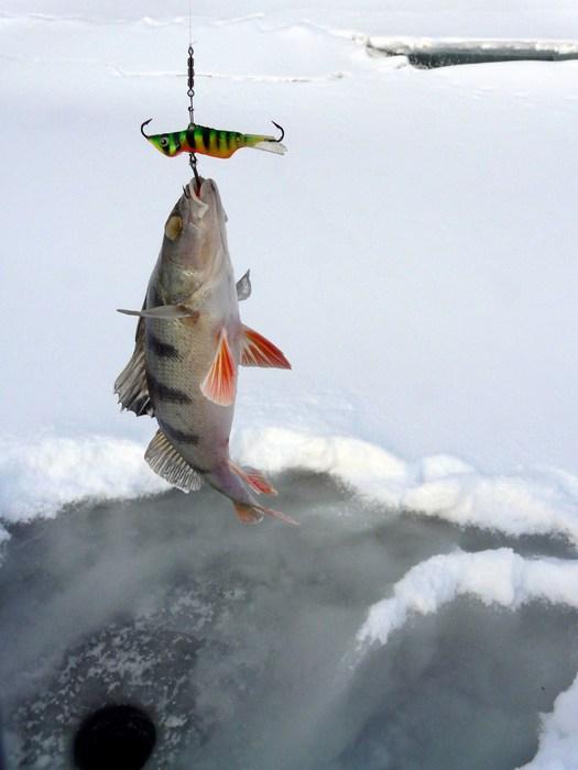 Зимняя рыбалка на окуня Красноярском водохранилище 13012018