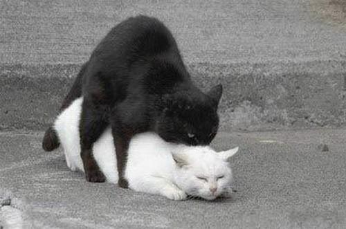 Котята занимаются сексам с хозяйкой