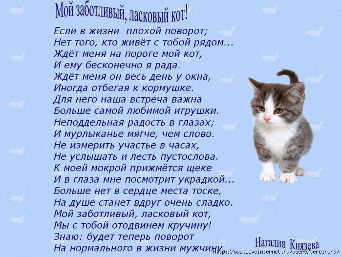 Стихи про котика любимого