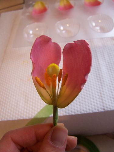Gumpaste Tulip Tutorial19 (375x500, 108Kb)