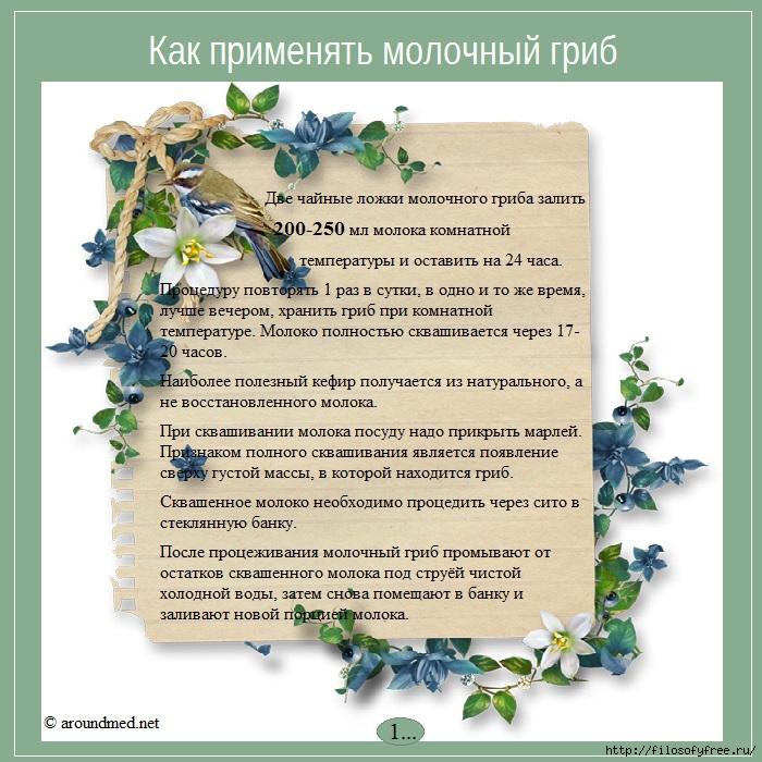 применение молочного гриба/1431851764_primenenie_molochnogo_griba (700x700, 328Kb)