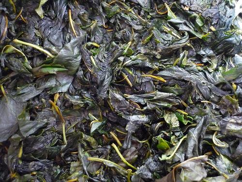 1433926644_fermentaciya_ivanchayakipreya_10 (500x375, 119Kb)