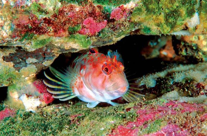 подводные обитатели хорватии список и фото переведите все