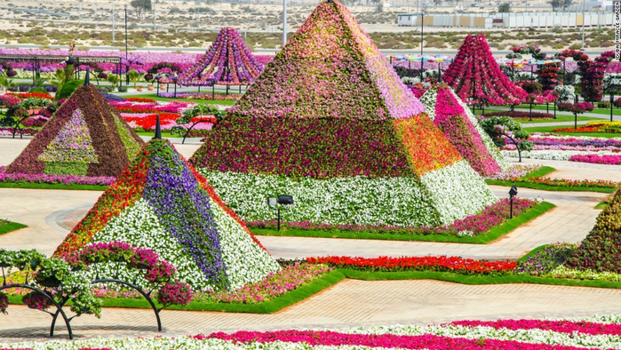 131004161853-unexpected-desert-things-dubai-miracle-garden-horizontal-large-gallery (700x394, 518Kb)