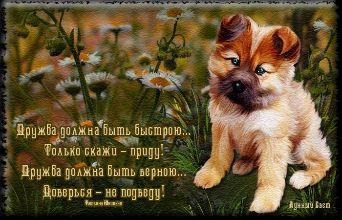 красивые картинки со стихами про дружбу рекламный слоган продающих