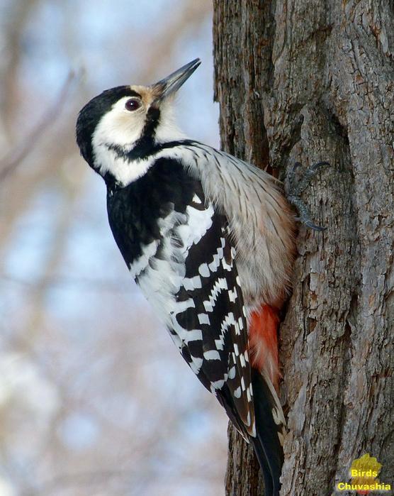 Узоры и картинки с птицами деятельности заявлена