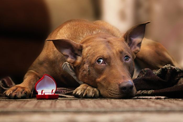 <b>Собаки</b>. | Записи в рубрике <b>Собаки</b>. | Дневник Елена_ВЕА ...