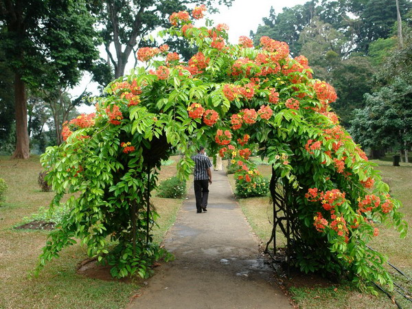 arbor-and-archway-in-garden1-17 (600x450, 168Kb)