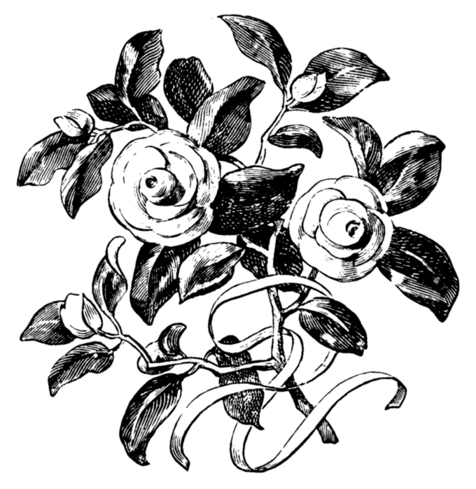Букет роз графика, свежих