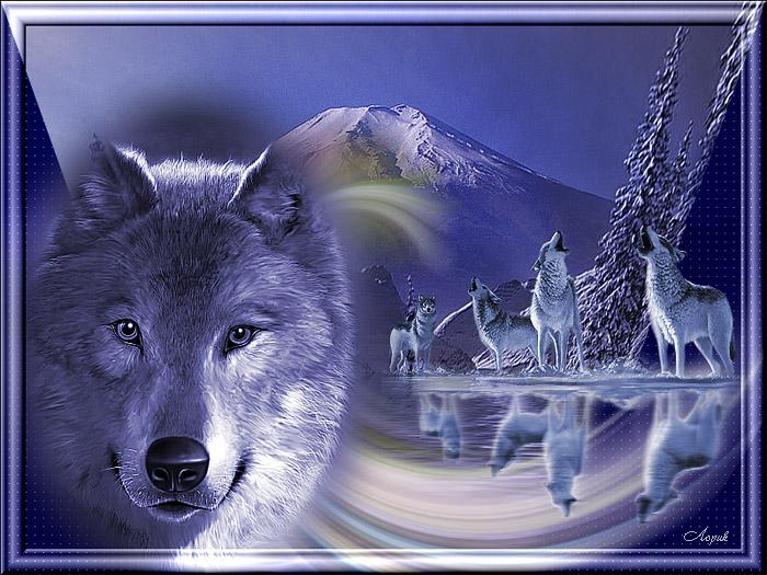 Фан, душа волка открытка