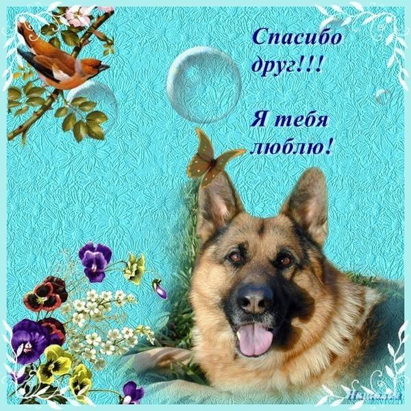 Картинках, картинки спасибо собаки