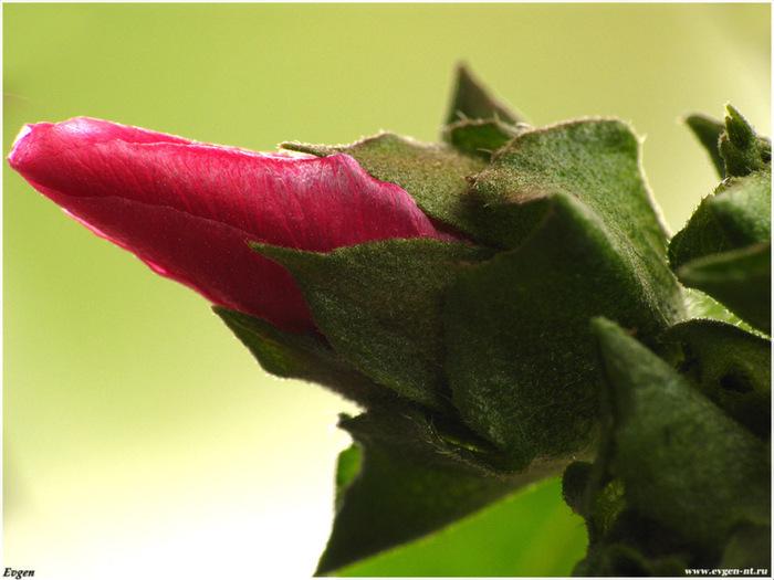 Эротика цветы любви — pic 11
