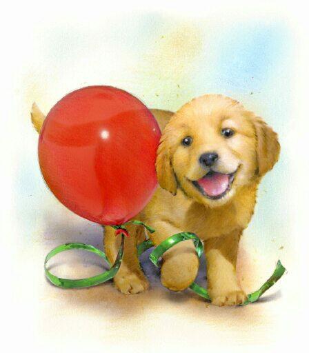 картинки про шарика собаку меня есть простое