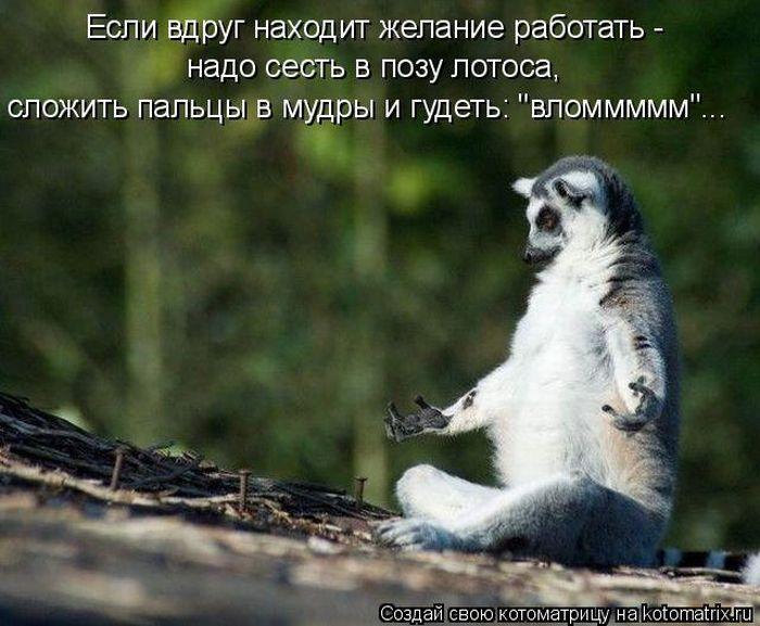 http://img1.liveinternet.ru/images/attach/c/4/80/718/80718841_vlom_kotomatrica.jpg