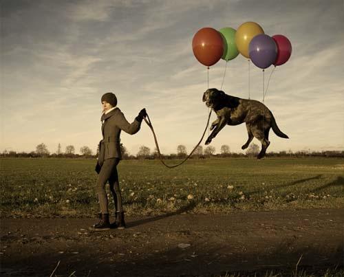 Картинки по запросу Правильные прогулки с собакой