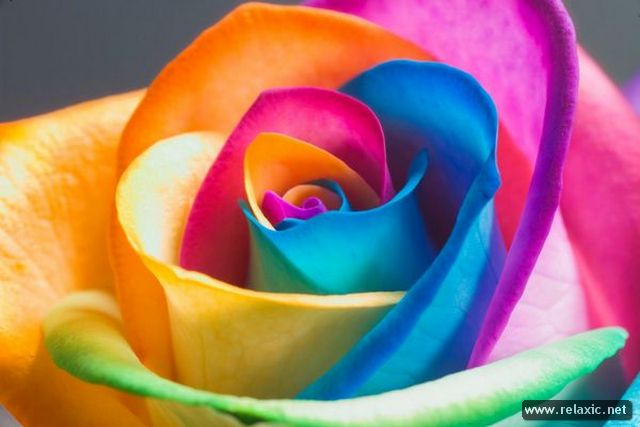 Rainbow_Flowers_016 (640x427, 35Kb)