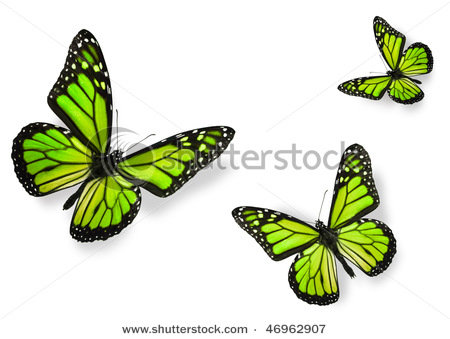 stock-photo-green-butterflies-isolated-on-white-flying-towards-center-of-frame-46962907 (450x339, 48Kb)
