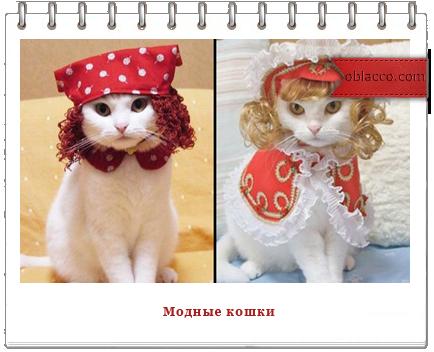 модные кошки/3518263_koshki (434x352, 206Kb)