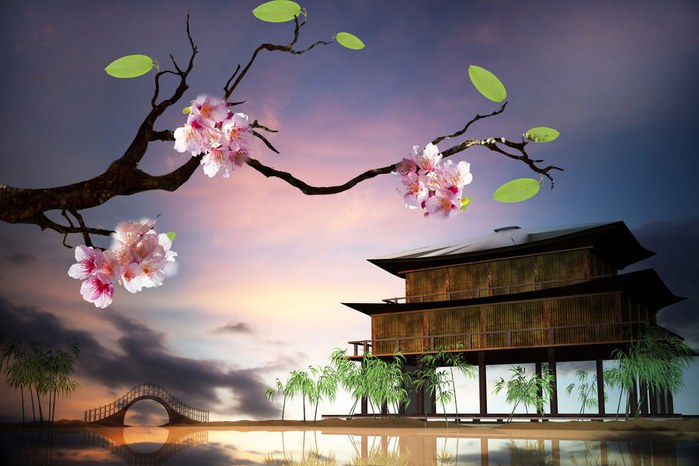 yaponiya-sakura-vishnya-cvety (700x466, 67Kb)