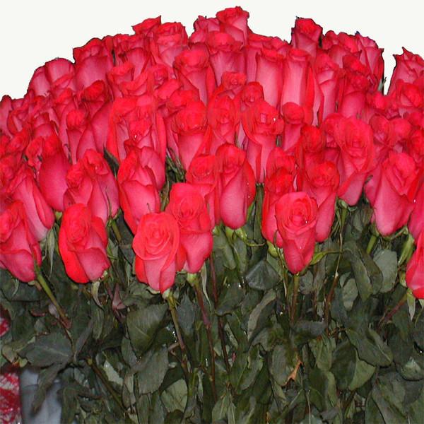 А-6 мая, миллион роз картинки с днем рождения