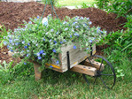 Превью Wooden-wheelbarrow-with-hanging-basket-of-blue-eyes (640x480, 506Kb)