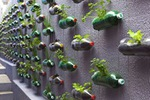 Превью vertical-garden-bottles-01 (468x312, 134Kb)