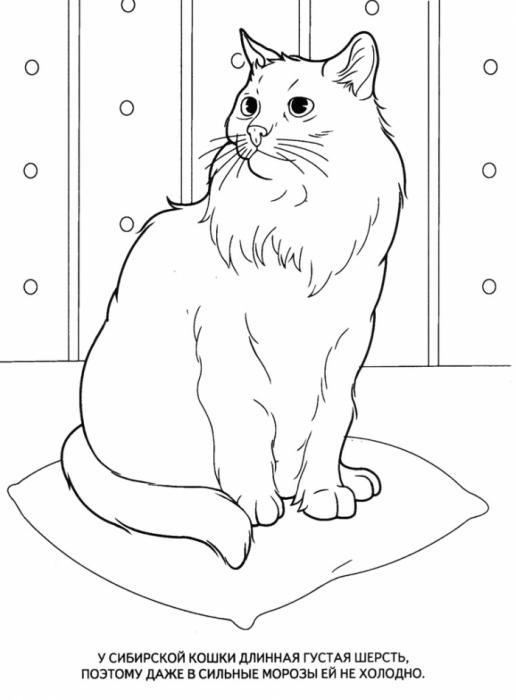 раскраски домашние животные обсуждение на Liveinternet
