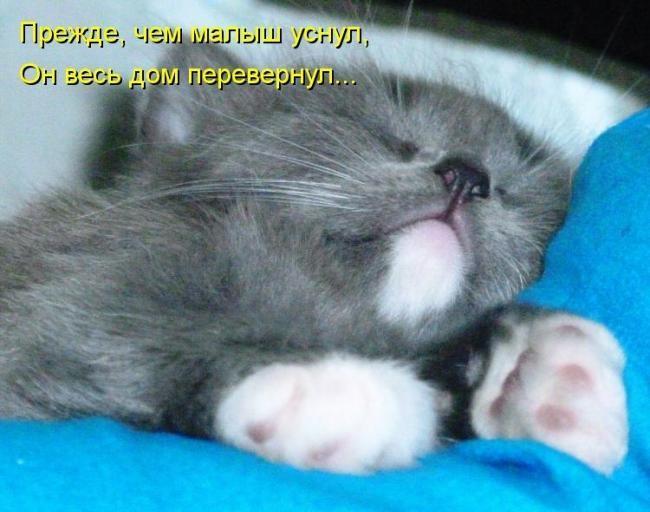 Миллер в своей книге отмечает, что пушистые крохи должны насторожить спящего.