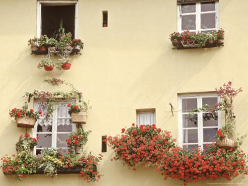 Italy-window-boxes (500x375, 35Kb)