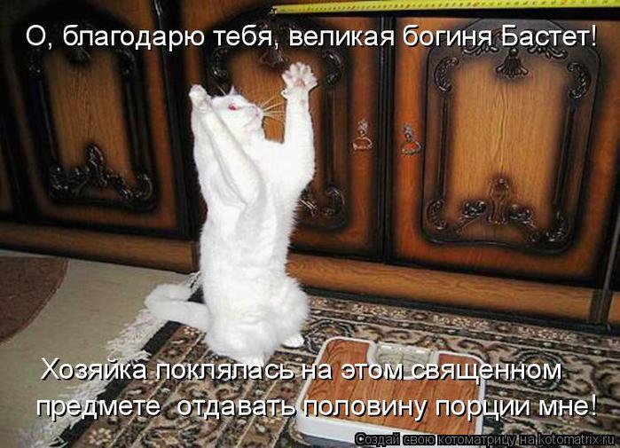 http://img1.liveinternet.ru/images/attach/c/5/85/493/85493077_kot_molitsya.jpg
