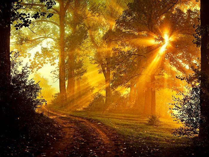 Гифки с солнцем природой