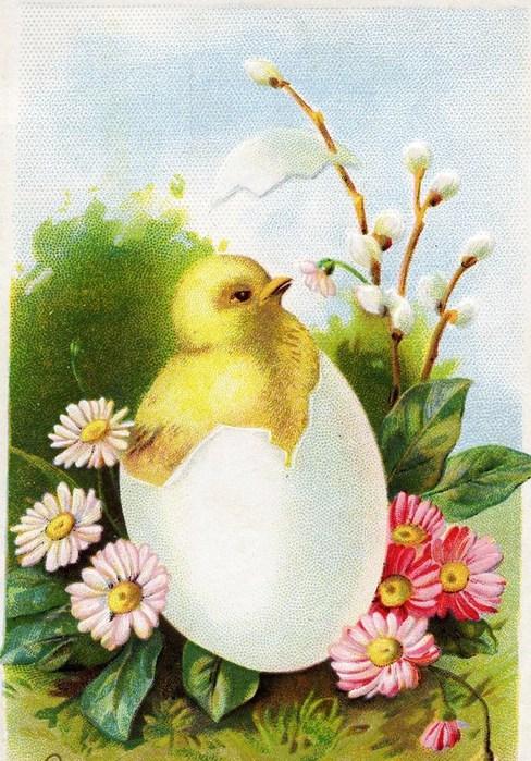 Пасхальные открытки цыплята, лет юбилей открытки