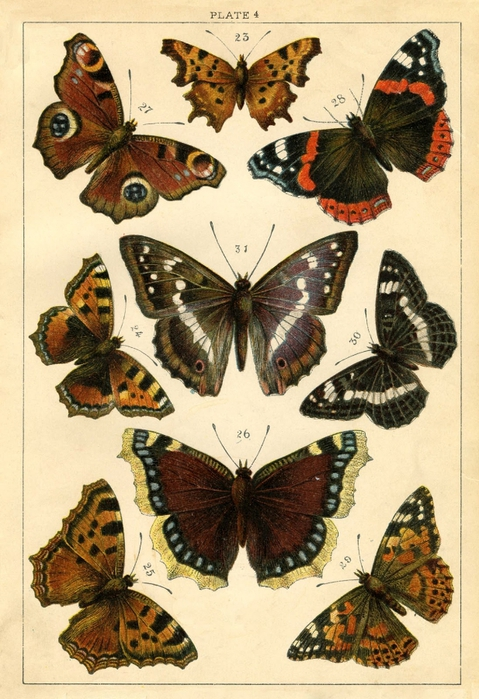 Butterflies-old-Image-Graphics-Fairy2sm (479x700, 299Kb)