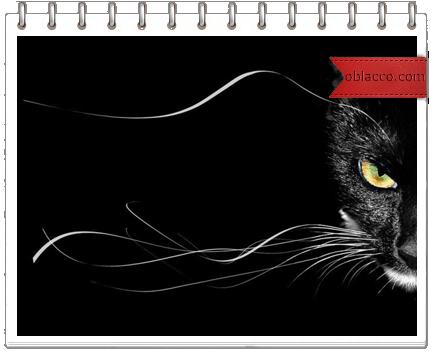 черная кошка/3518263__4_ (434x352, 87Kb)